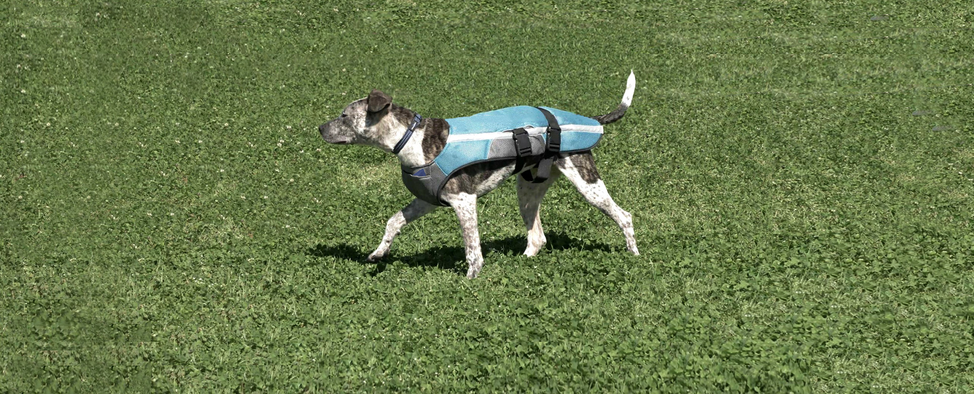 Kool Jack Dog Vest, Keep Your Dog Cool Anywhere You Go